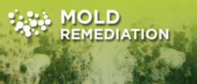 Mold Remediation Classic Carpet Care & Restoration