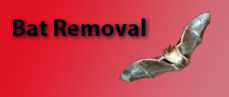 Bat Removal Classic Carpet Care and Restoration